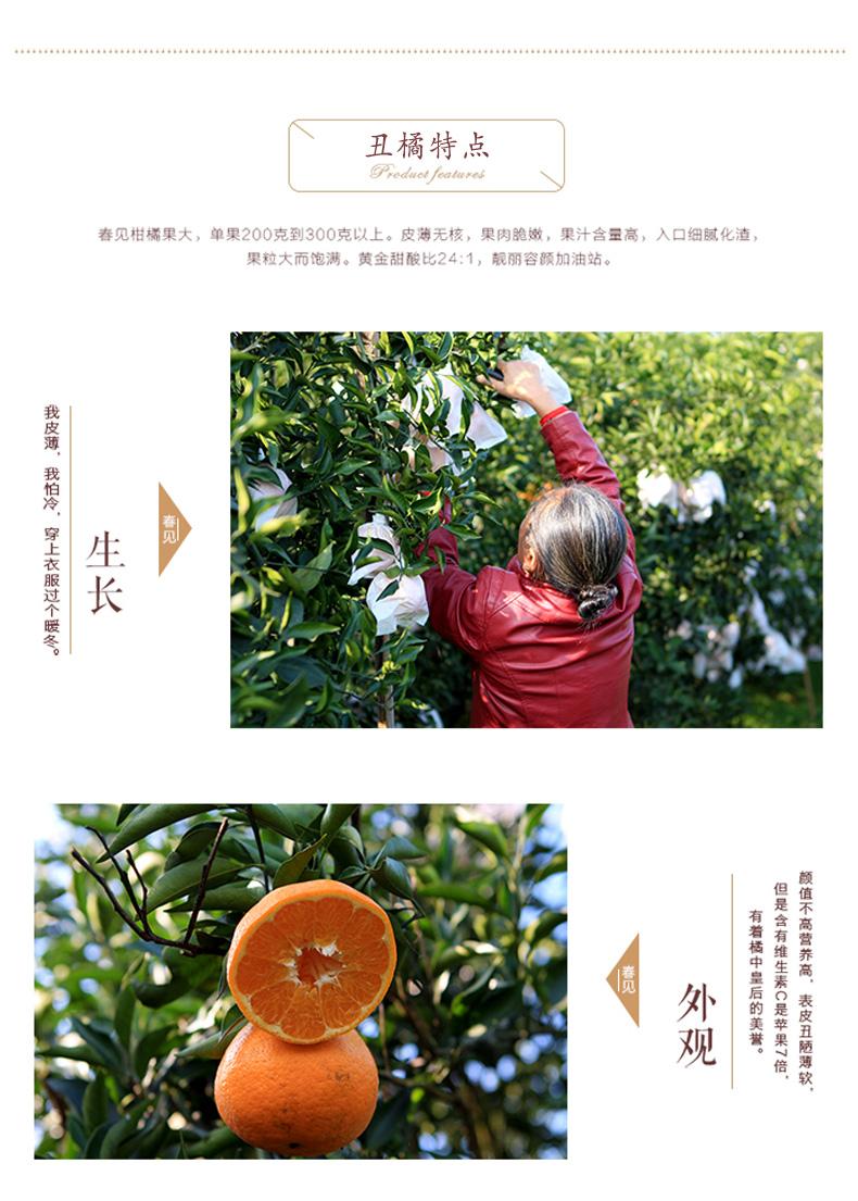 丑橘详情页05.jpg