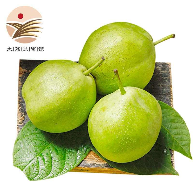 陕西早酥梨4.5-5斤 16个左右