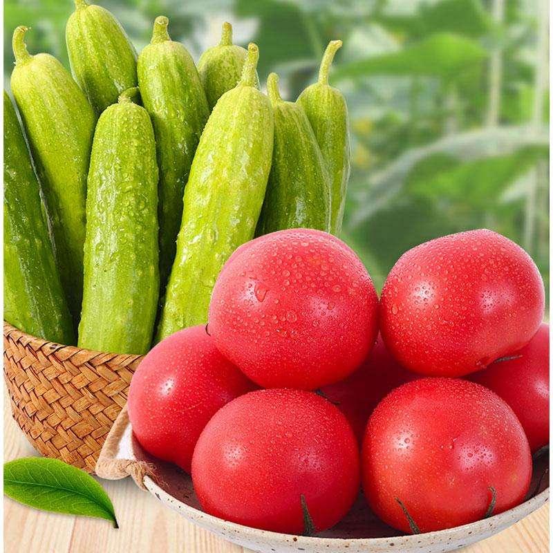 山东白玉黄瓜+西红柿组合箱装 4.5-5斤装