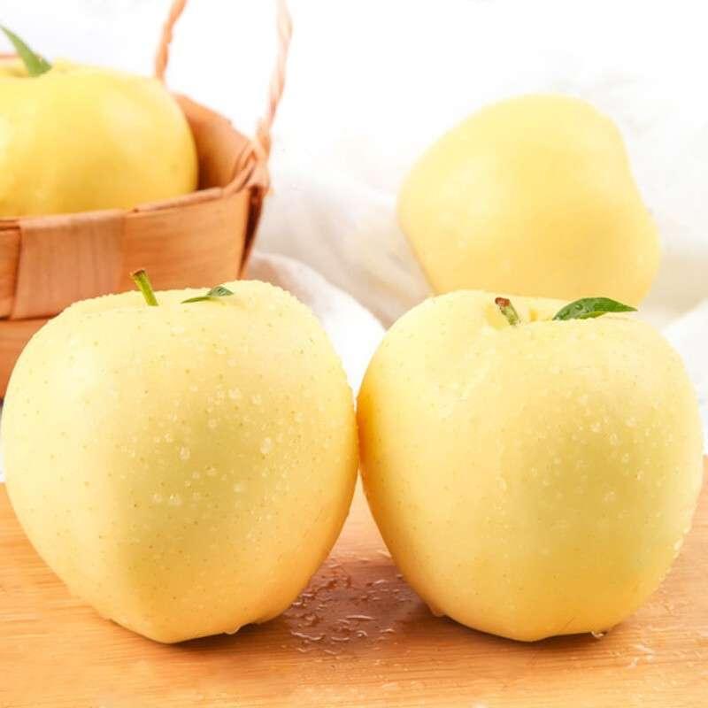 黄金奶油富士苹果9粒 礼盒 山东烟台白冰糖心至尊奶油红富士礼盒
