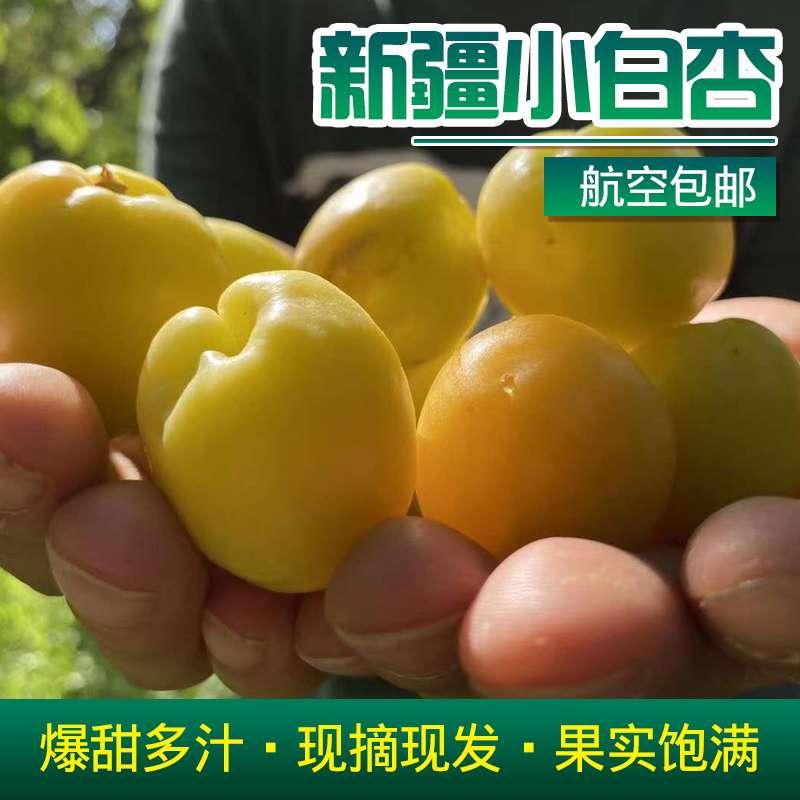 航空包邮 新疆小白杏 应季现摘水果 4斤